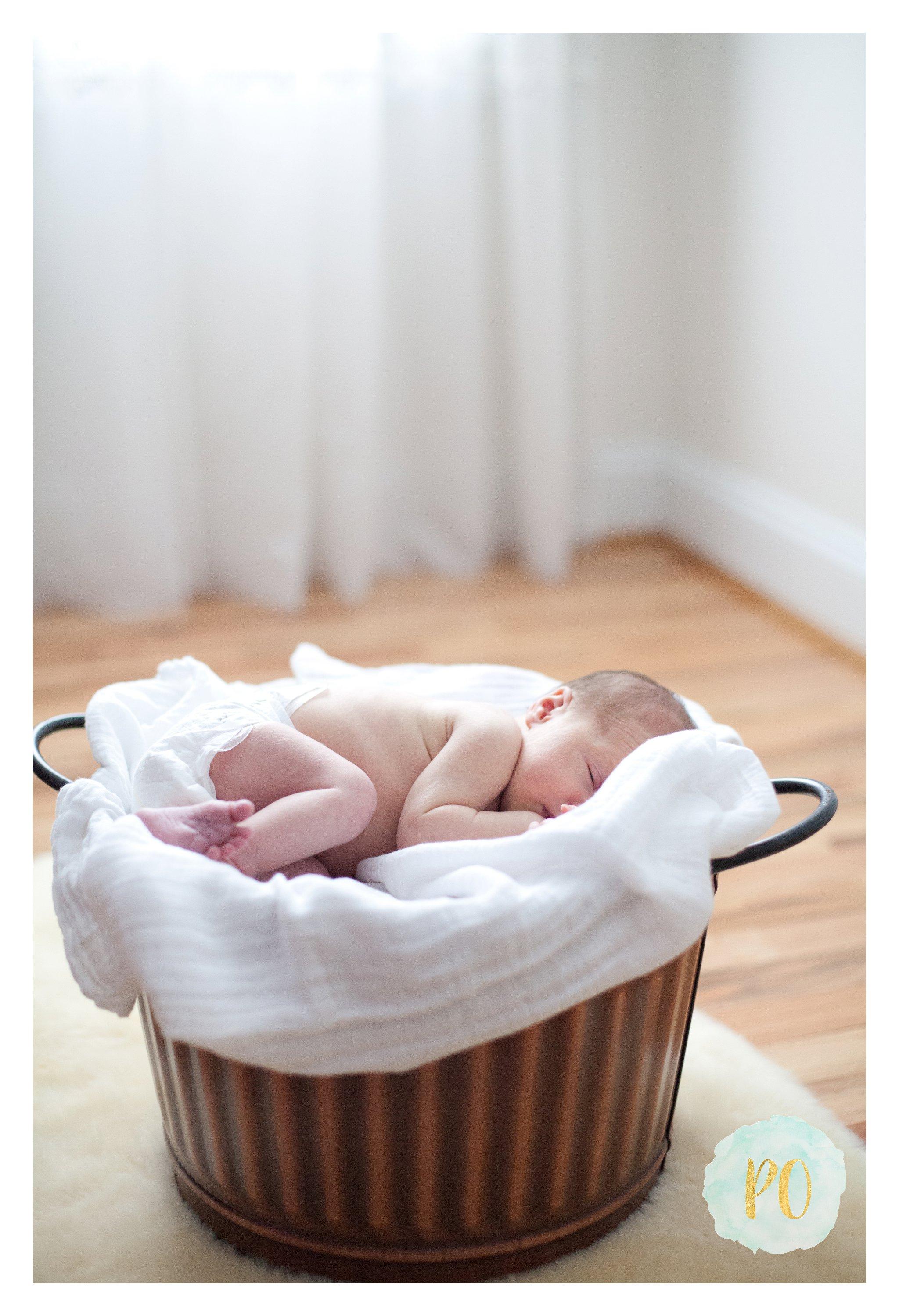 travelers rest newborn