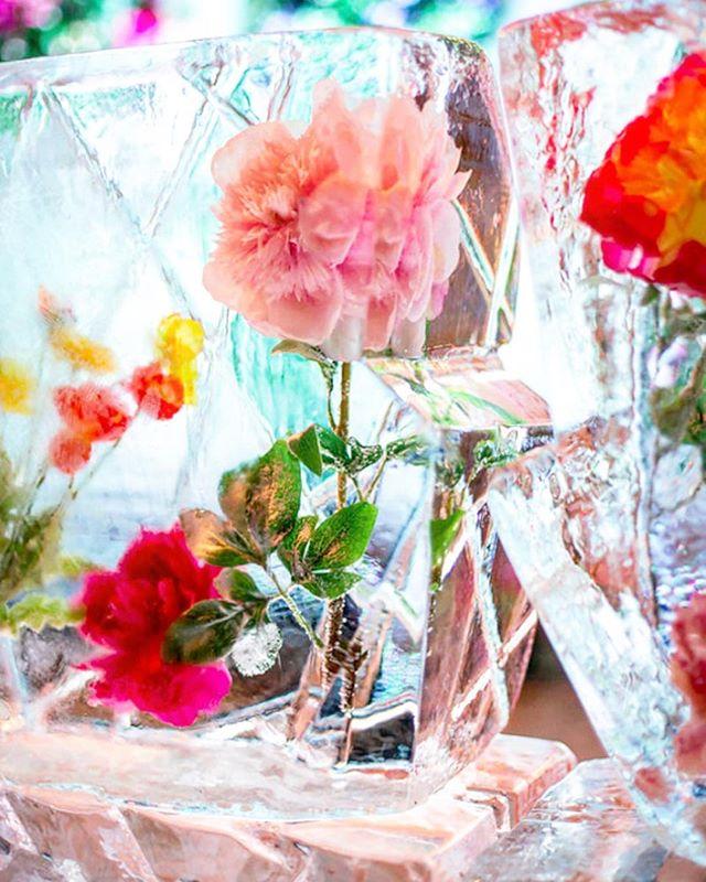 #Repost @latelierrouge ・・・ 🌷 Pretty In Pink 🌷 #icesculpture #wedding #weddingreception #weddingplanner #icebar #inspiration #partyinspiration #partydecor #flowerdesign #frozenflowers #frozeninice #frozen #beautiful