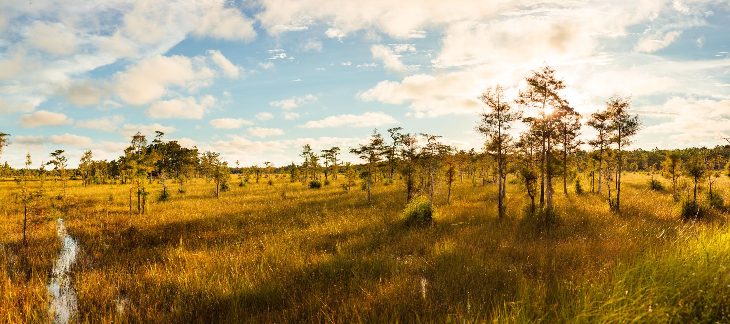 Big Cypress NP, FL