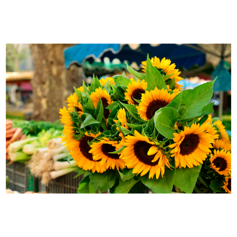 Farmers Market pic 2.png