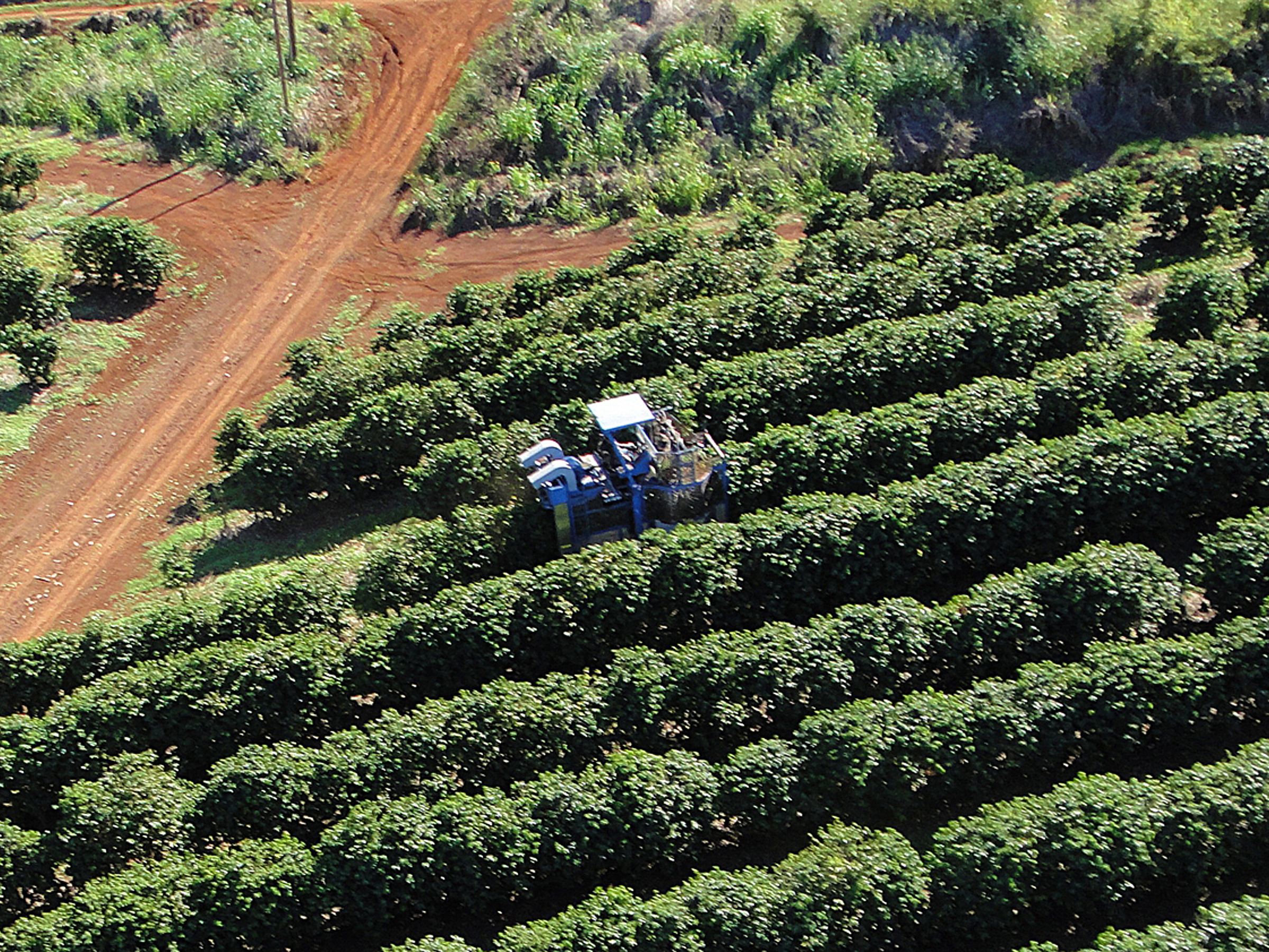 Crops are nurtured year-round in an ideal climate for growing outstanding coffee.