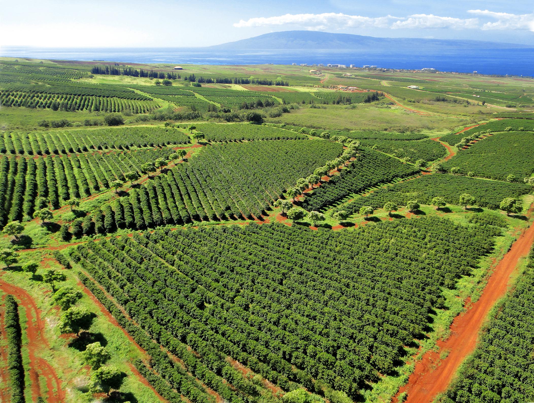 MauiGrown Coffee photo.jpg