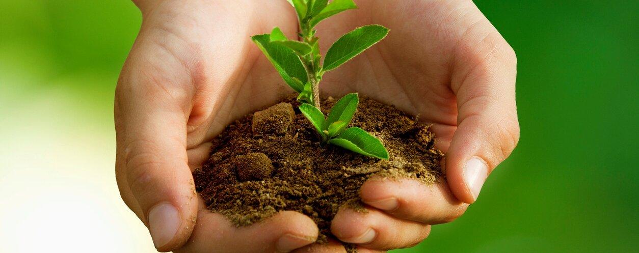 SustainabilityCropped.jpg