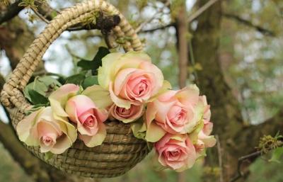 roses-2205014_1920 pixabay.jpg