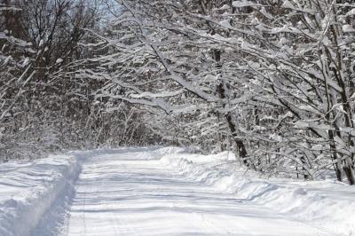 winter-1775503_1920 pixabay.jpg
