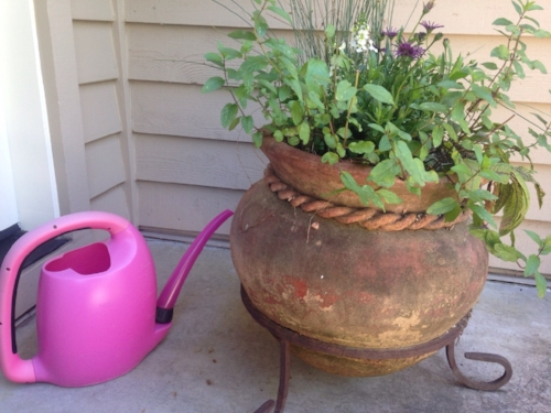Use your pre-heating shower/bath water for your gardens and flower pots