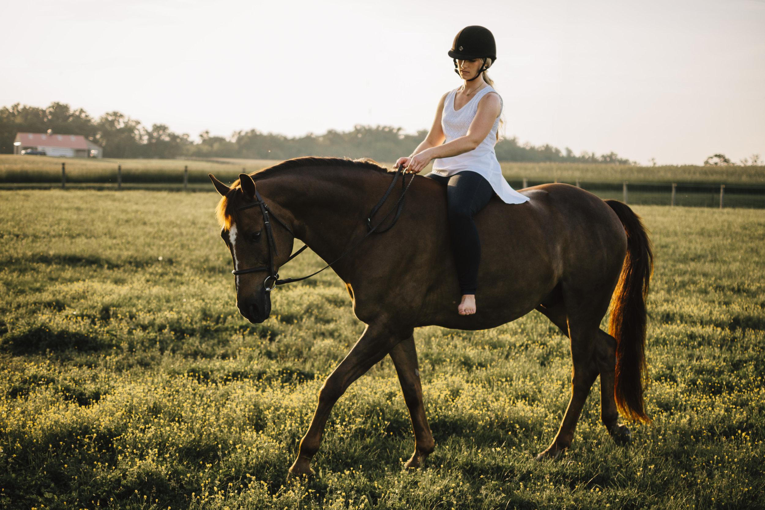 maryland equine photographers