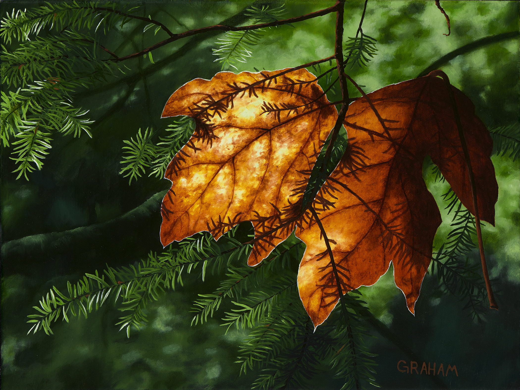 Autumn Glow  Web12x16.jpg