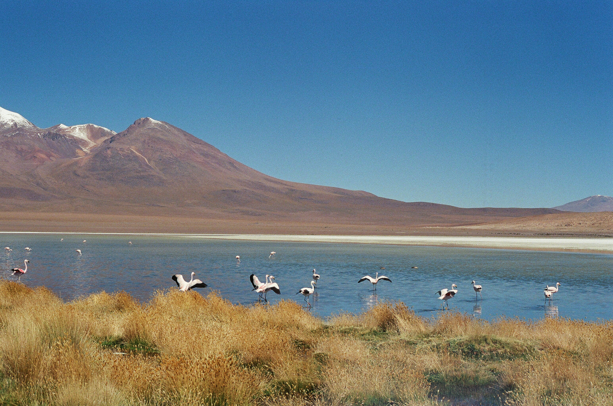 Laguna Hedionda, Bolivia  March 2018