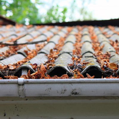 Roof and Gutter Cleaning  Learn more...