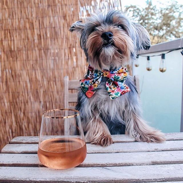 Clem is all dressed up for her brunch date! Is there anything better than puppies and Rosé? 🍷🌸 Photo by the beautiful @life_of_clem ! She's wearing one of our floral prints by @riflepaperco in size XS