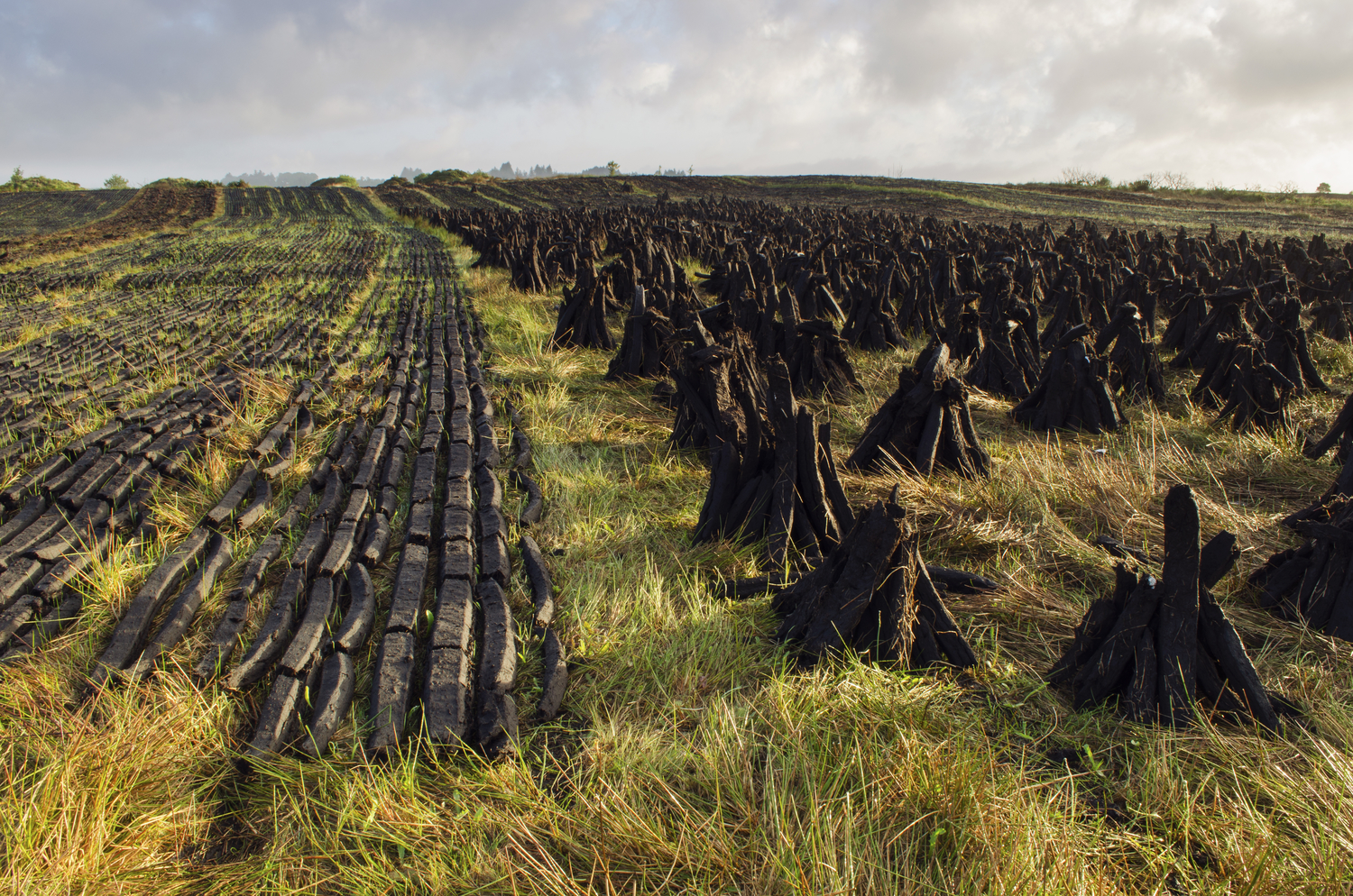 Irish Peat -