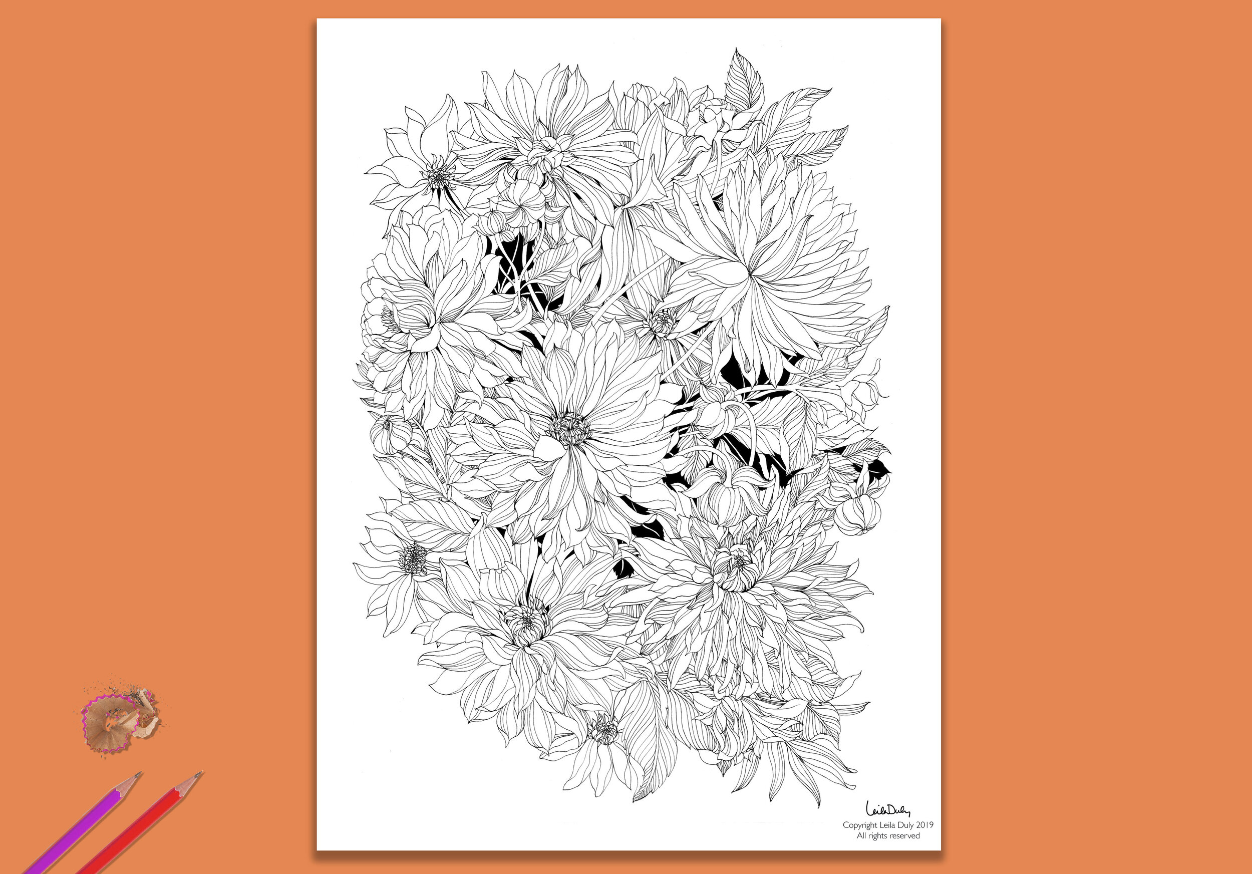 Dahlia - - Drawing download