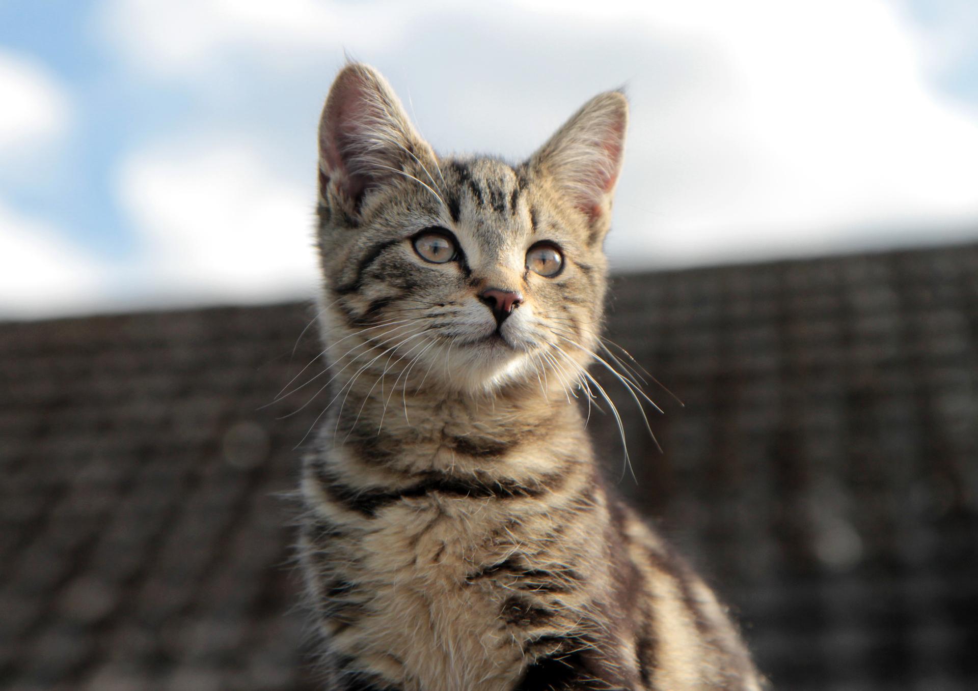 Malvern Pet Photography