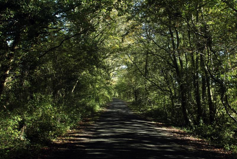 Country Lane, Worcs.