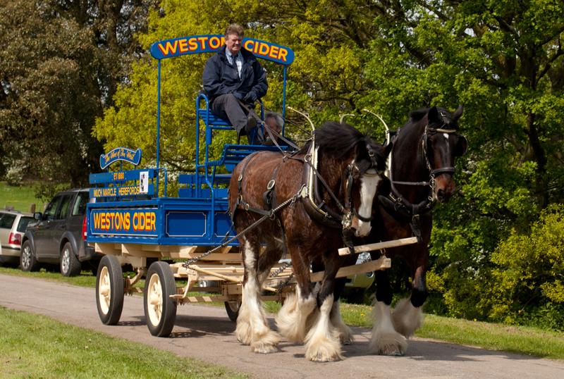 Westons Cider Horse and Dray, Bredon School, Glos.