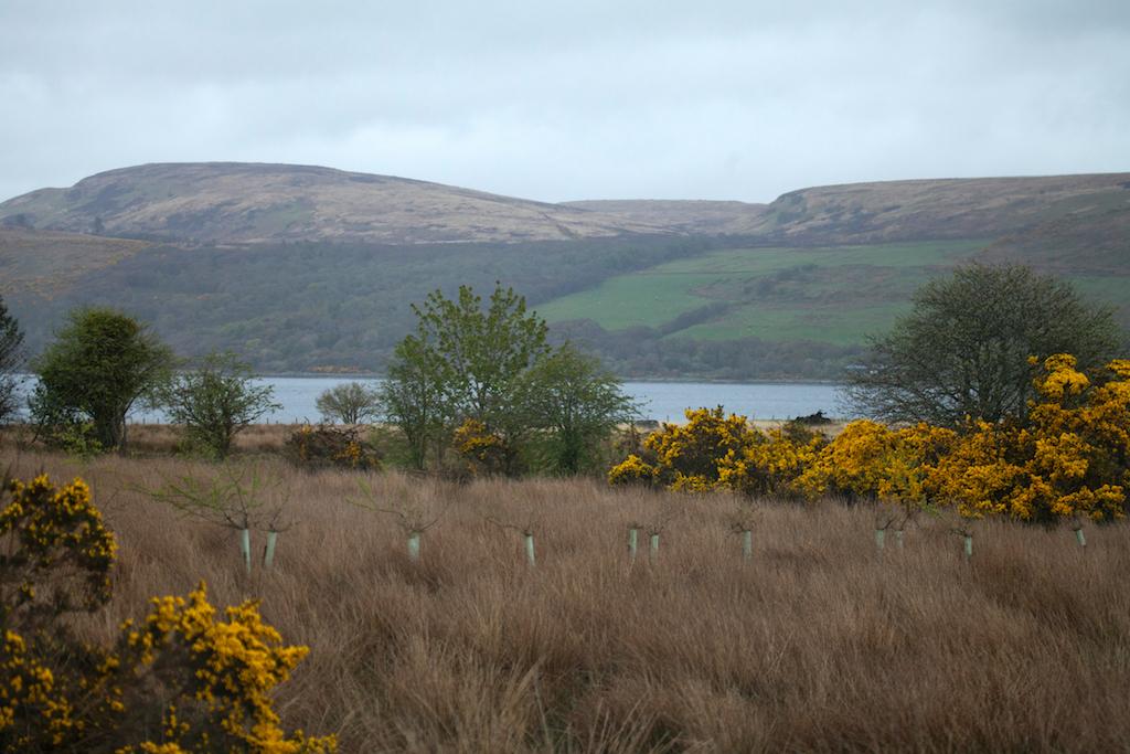 Scotland56.jpg