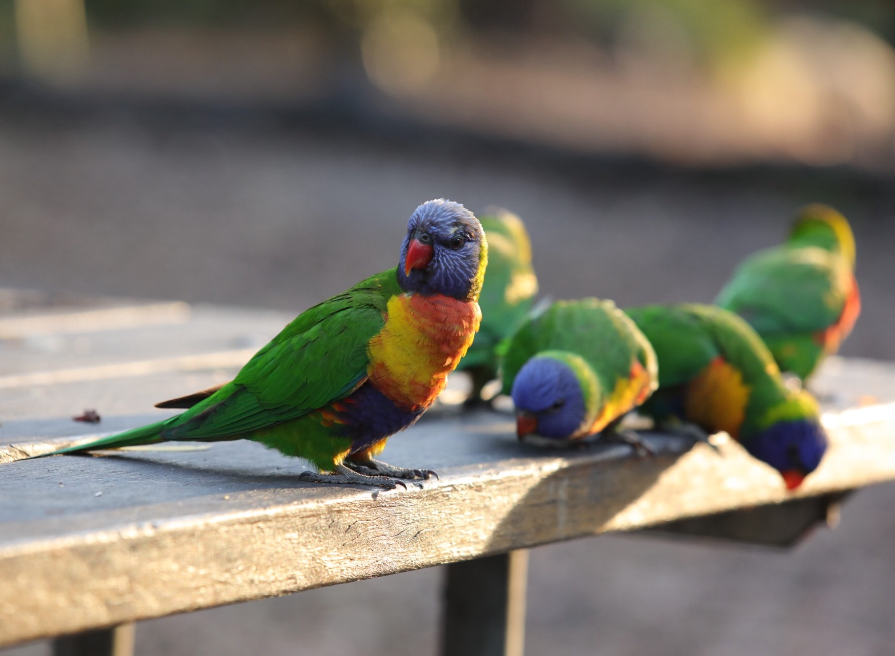 Seeing wild parrots for the first time