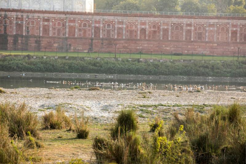 Wall around the Taj Mahal from the north bank, Agra, Uttar Pradesh, India