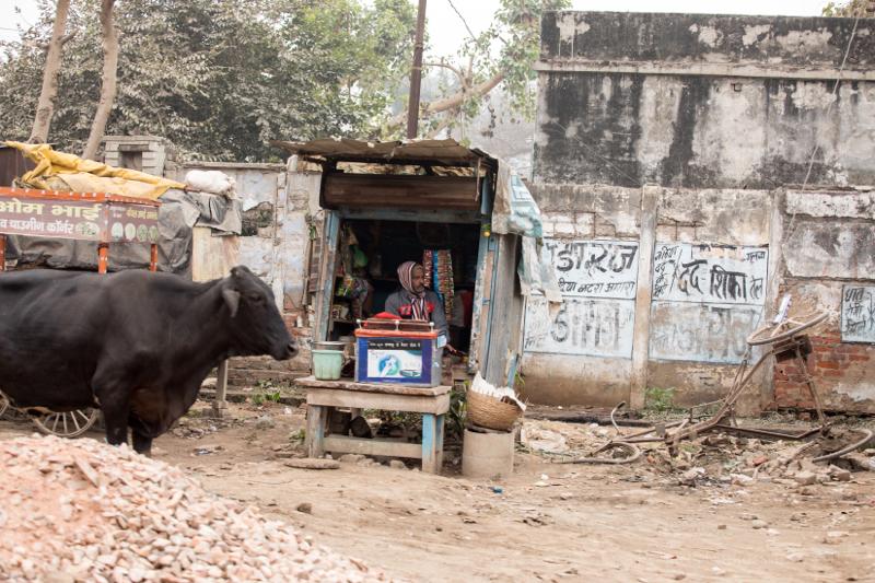 Street seller with cow,Agra, Uttar Pradesh, India