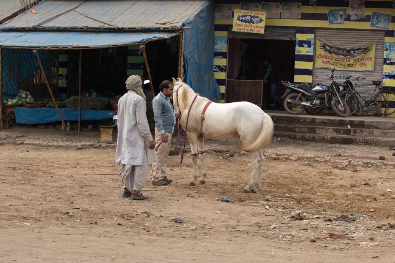 Men with white horse, Chhata, India