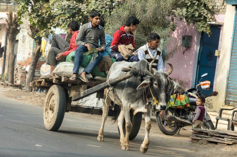 A ride home, Palwal, India