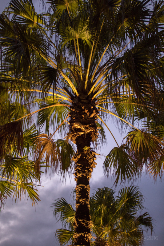 Palm trees, Sydney Harbour,Australia