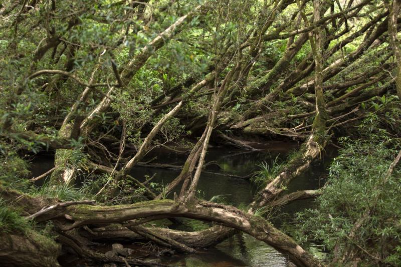 Bemm River Rainforest walk,Victoria, Australia