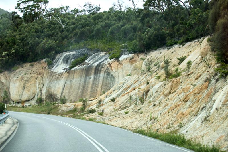 Western Grey Kangaroo, Wilson's Promontary, Victoria, Australia