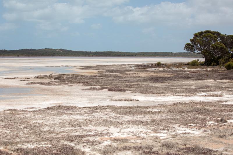 Salt-flats, Coorong National Park, South Australia