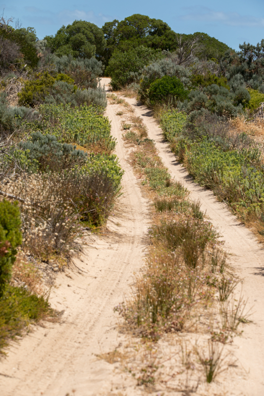 Path through the sand dunes, Coorong National Park, South Australia