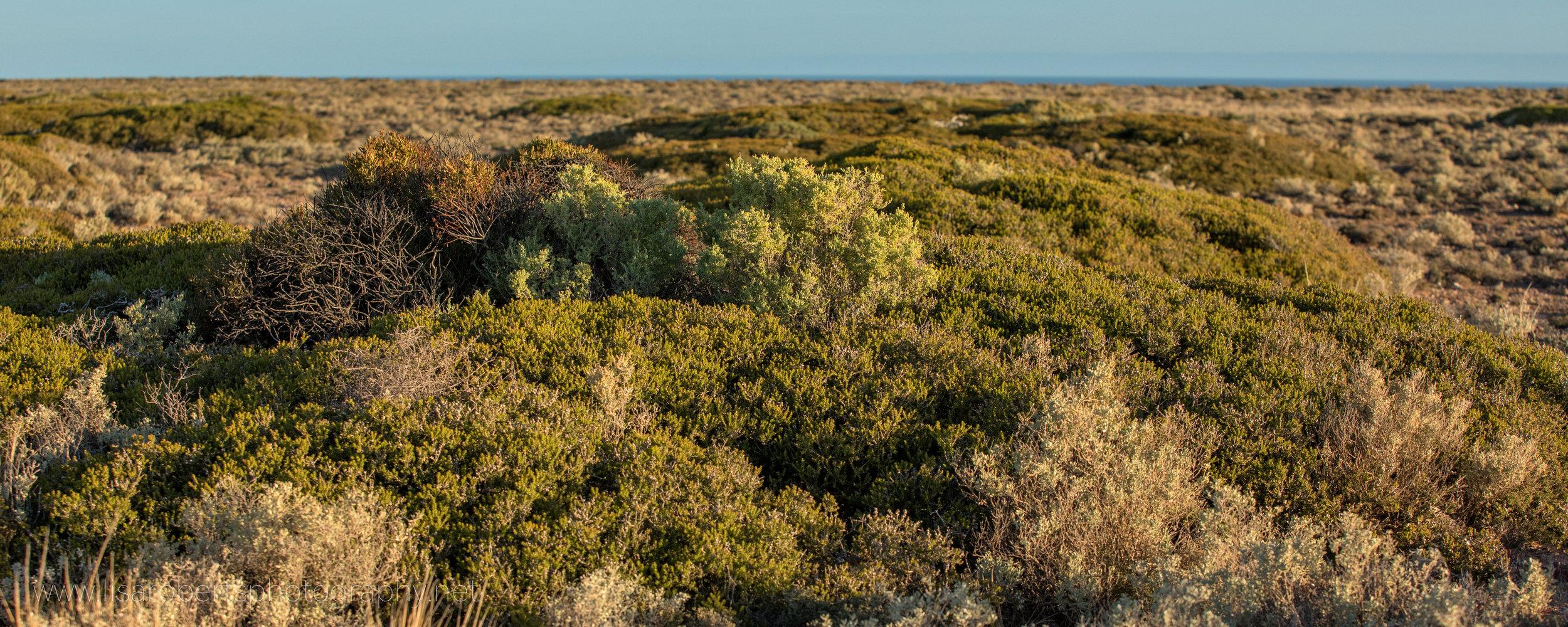 Desert View, South Australia