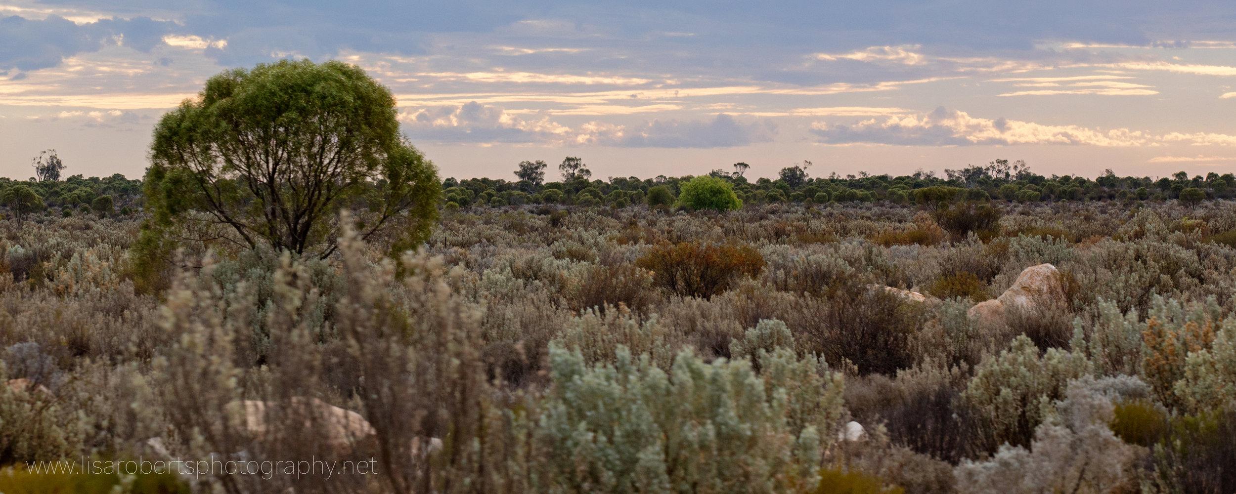 More bush! Western Australia