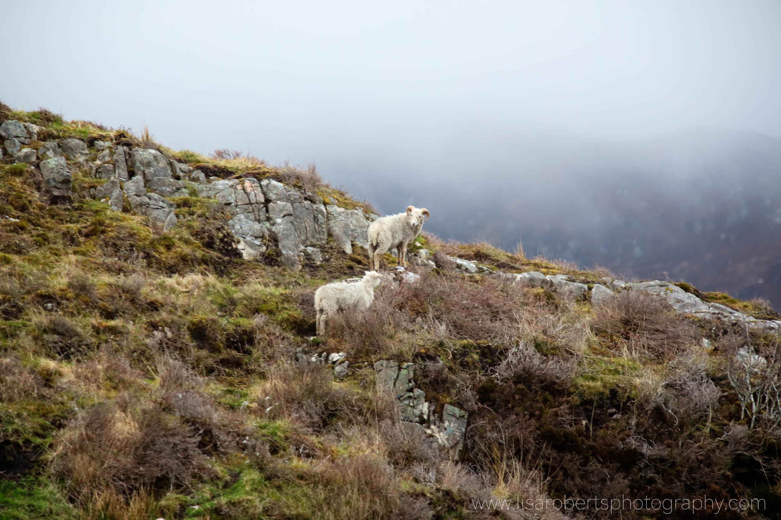 Scotland 182.jpg