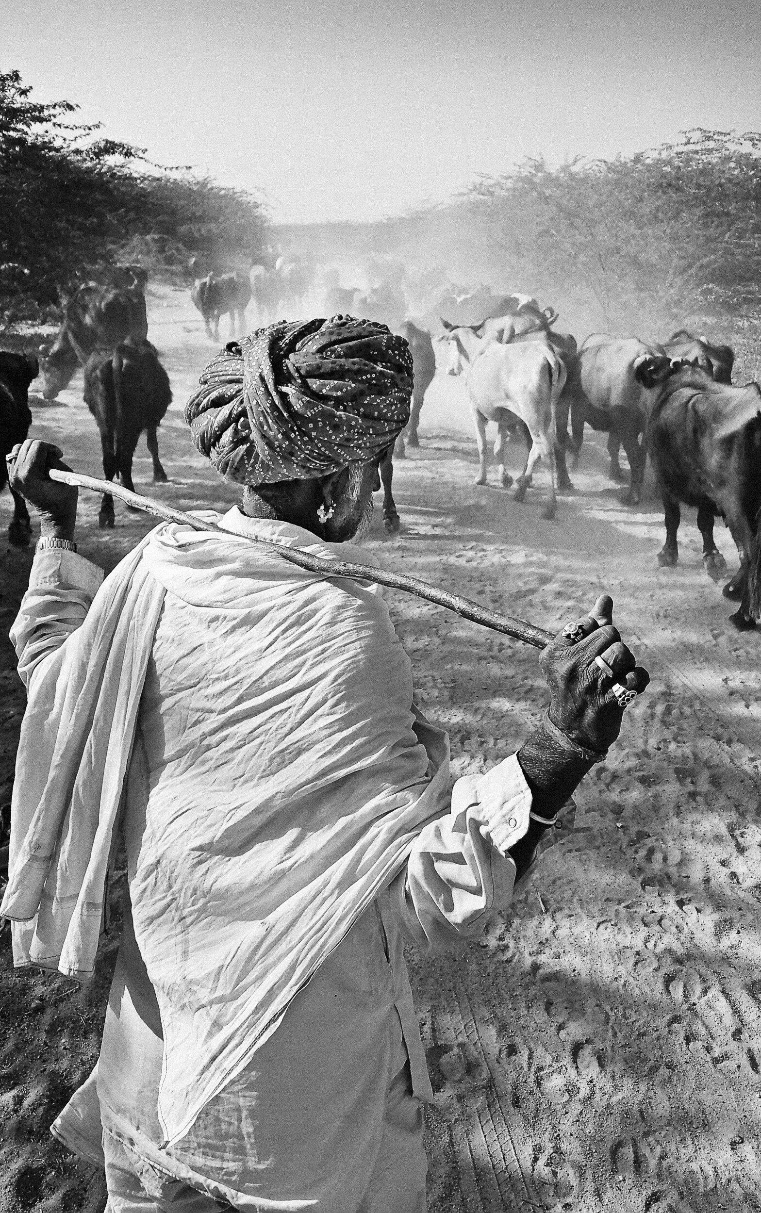 "Godhuli Bela: Cow-dust Time, Rohet, Jodhpur | Archival pigment print | 20"" x 12"""