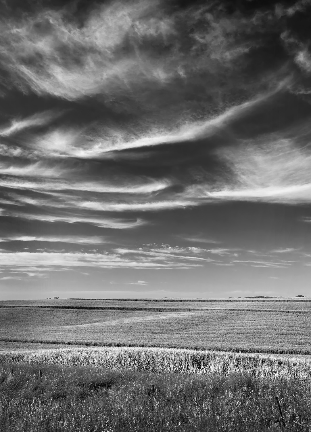 Larry Covalciuc -  Iowa Corn and Clouds , 2018  Council Bluffs, IA