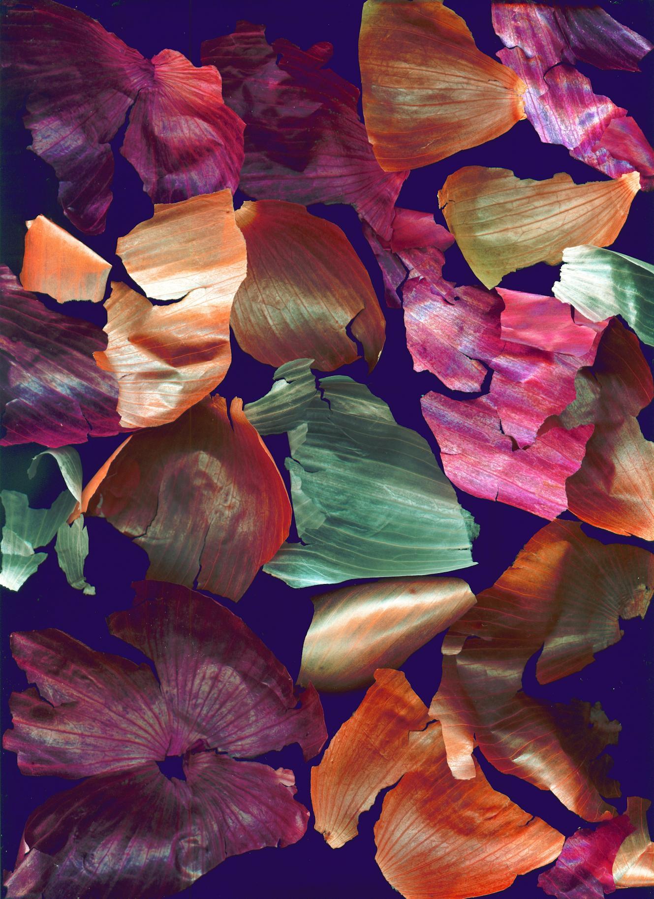 Paul Evans -  Colorful Onion Skins , 2012  Omaha, NE