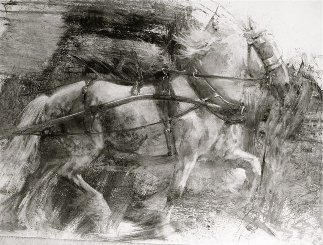 The Appleby Flasher: 16 x 20 charcoal/gouache on board by Lesley Humphrey