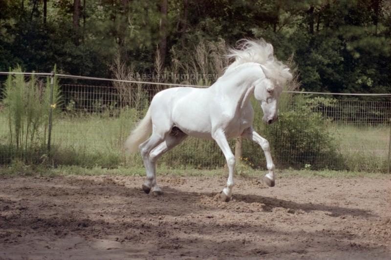 TENTADOR photograph by Lesley Humphrey, copyright 2000