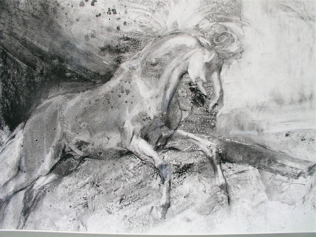 THE WHITE HORSE : 18 x 24 charcoal on board by Lesley Humphrey, 2002