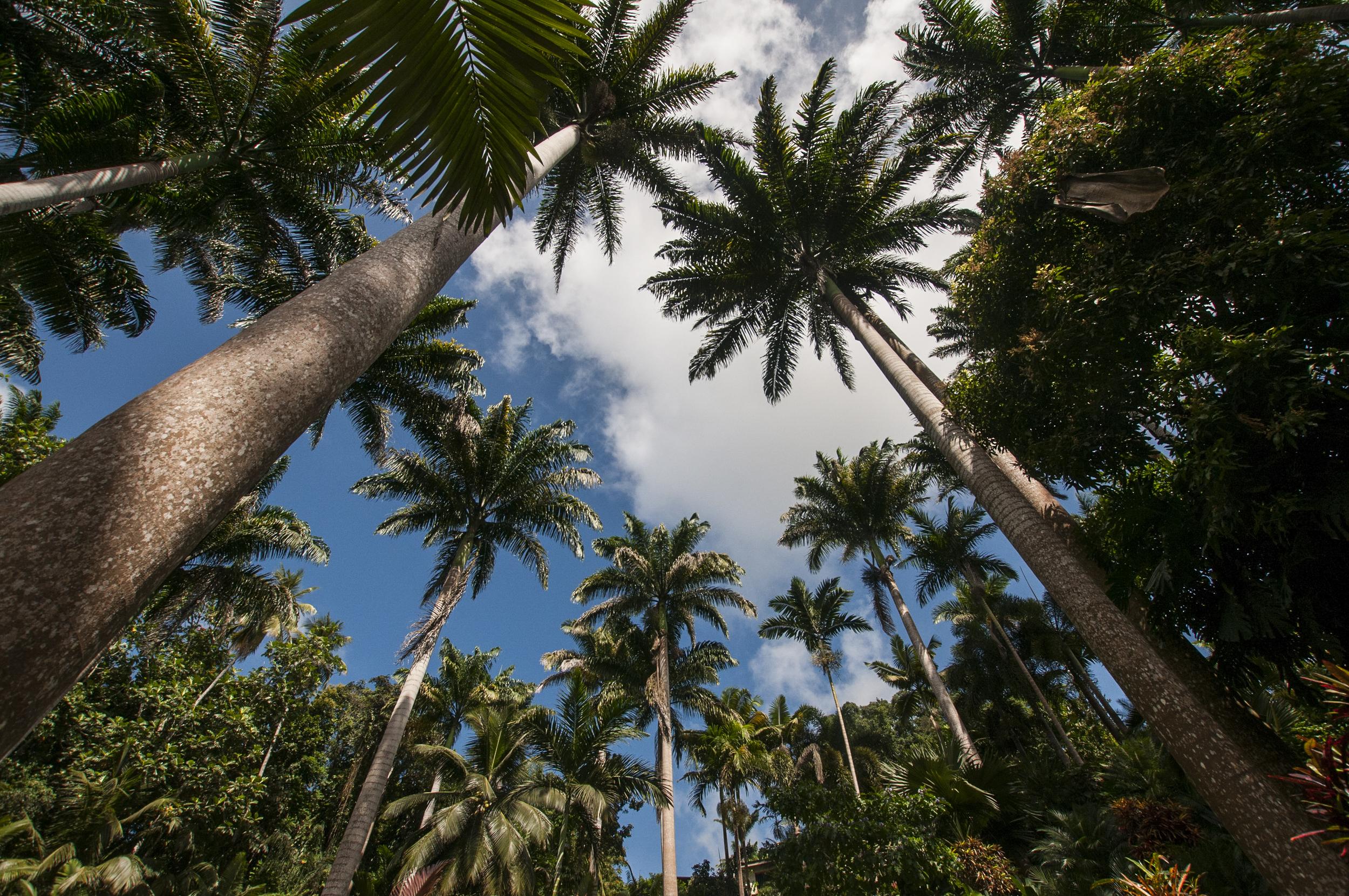 Barbados16-125.jpg