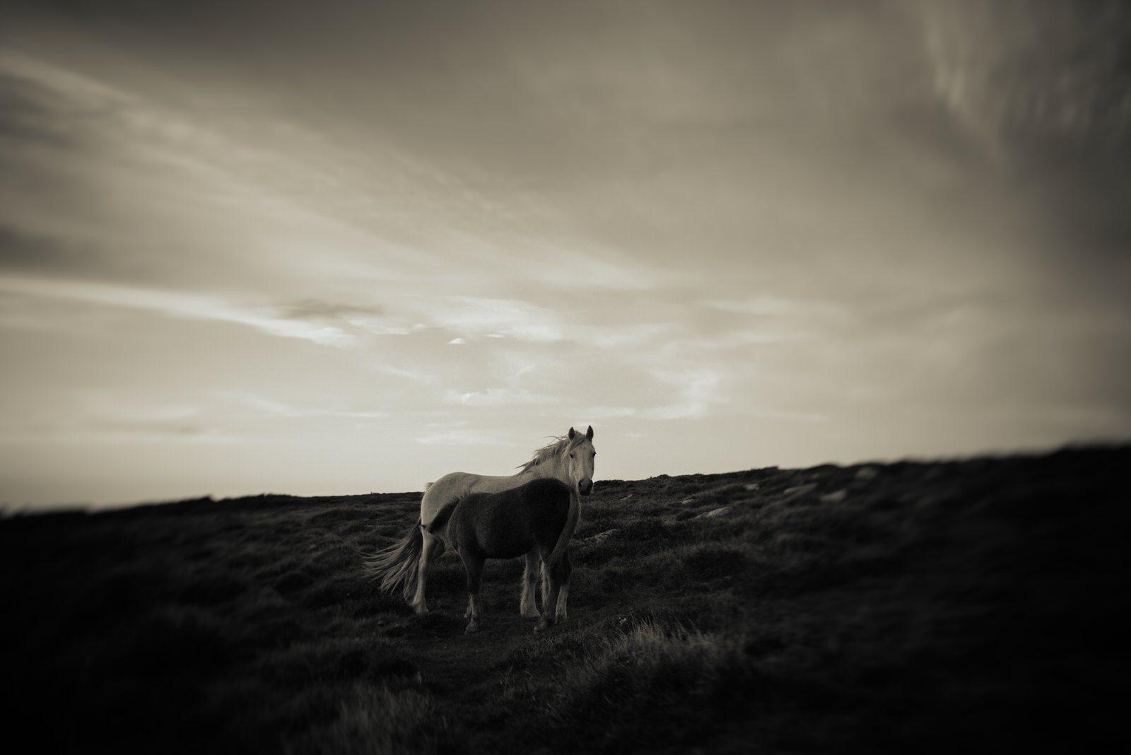Ponies-130012.jpg