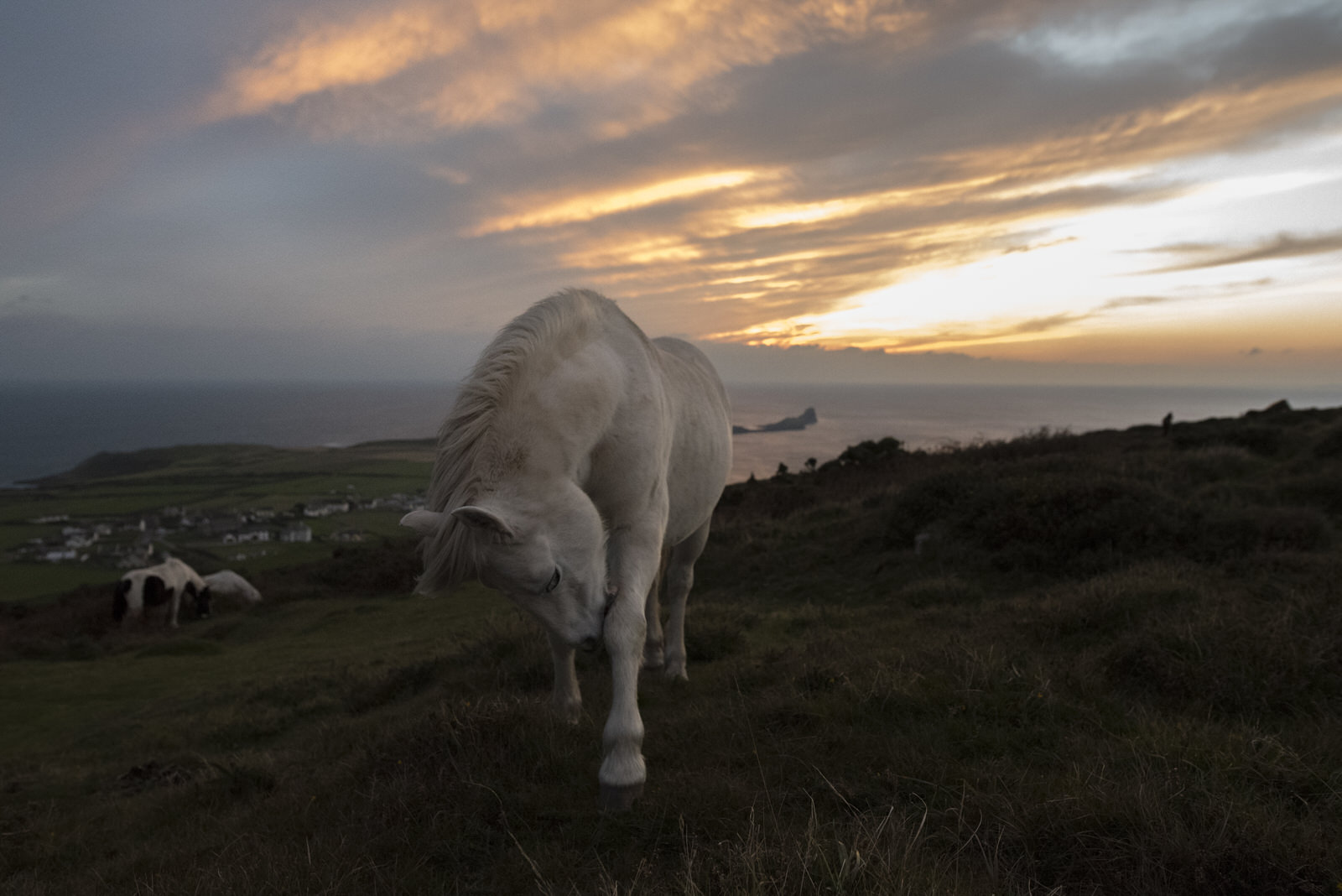 Ponies-6.jpg