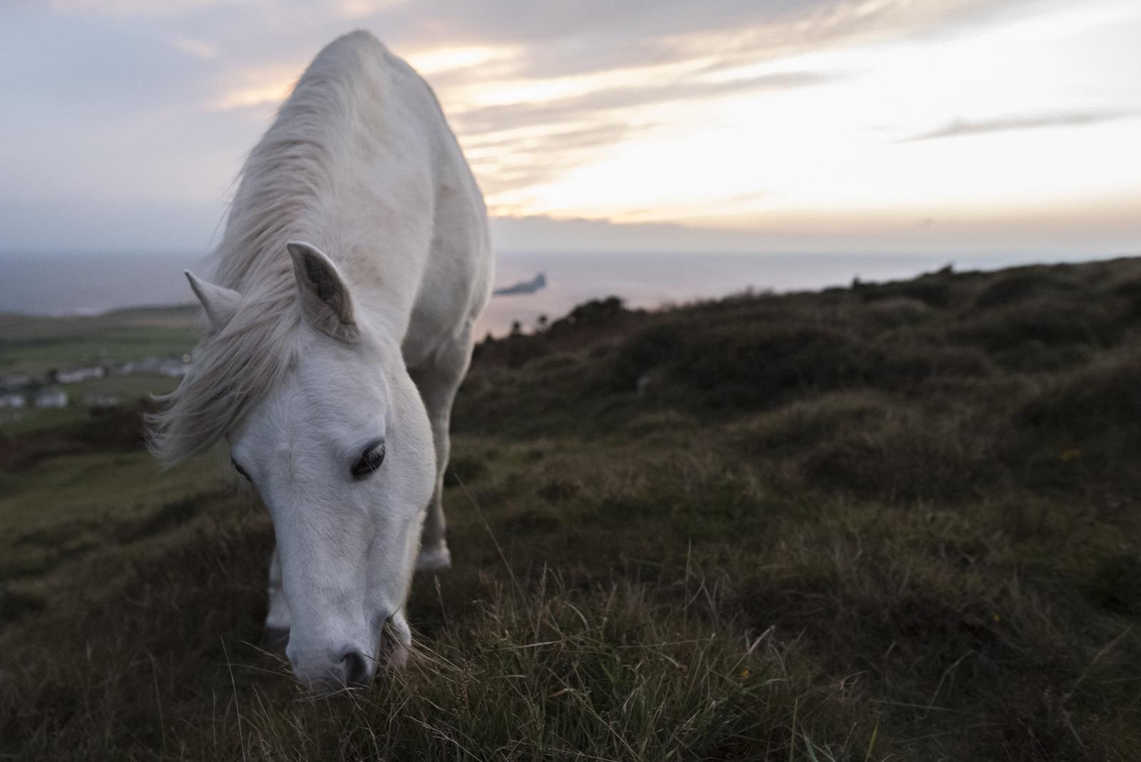Ponies-8.jpg