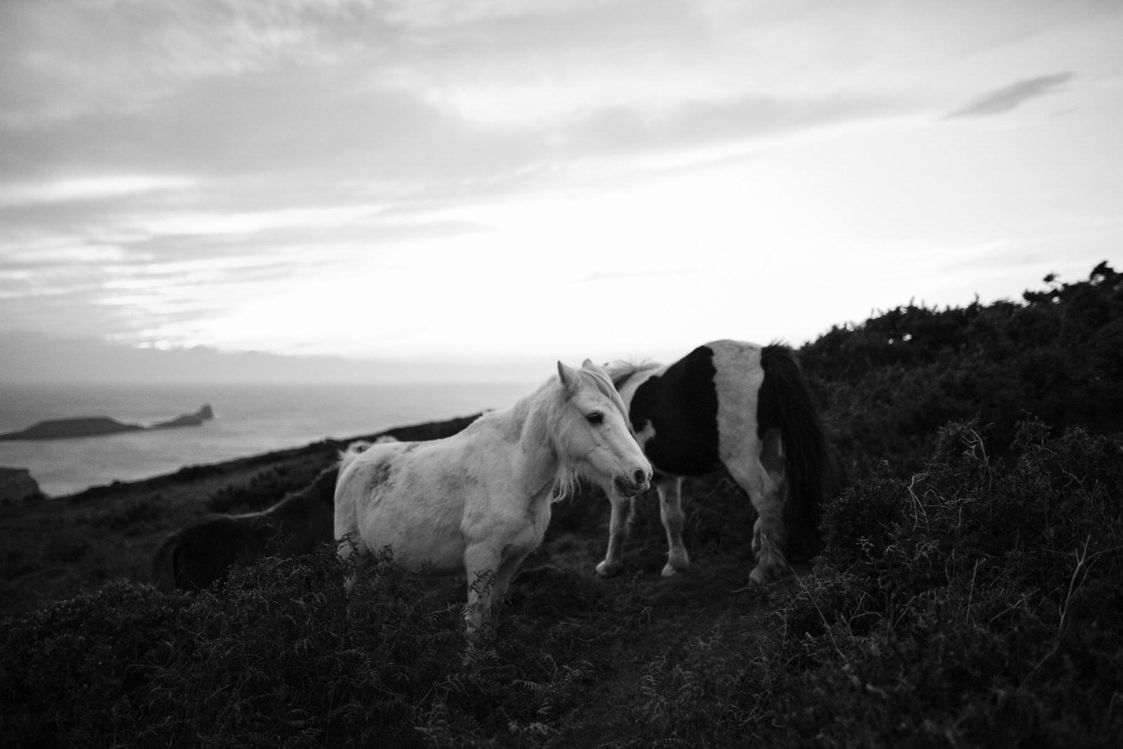Ponies-25.jpg