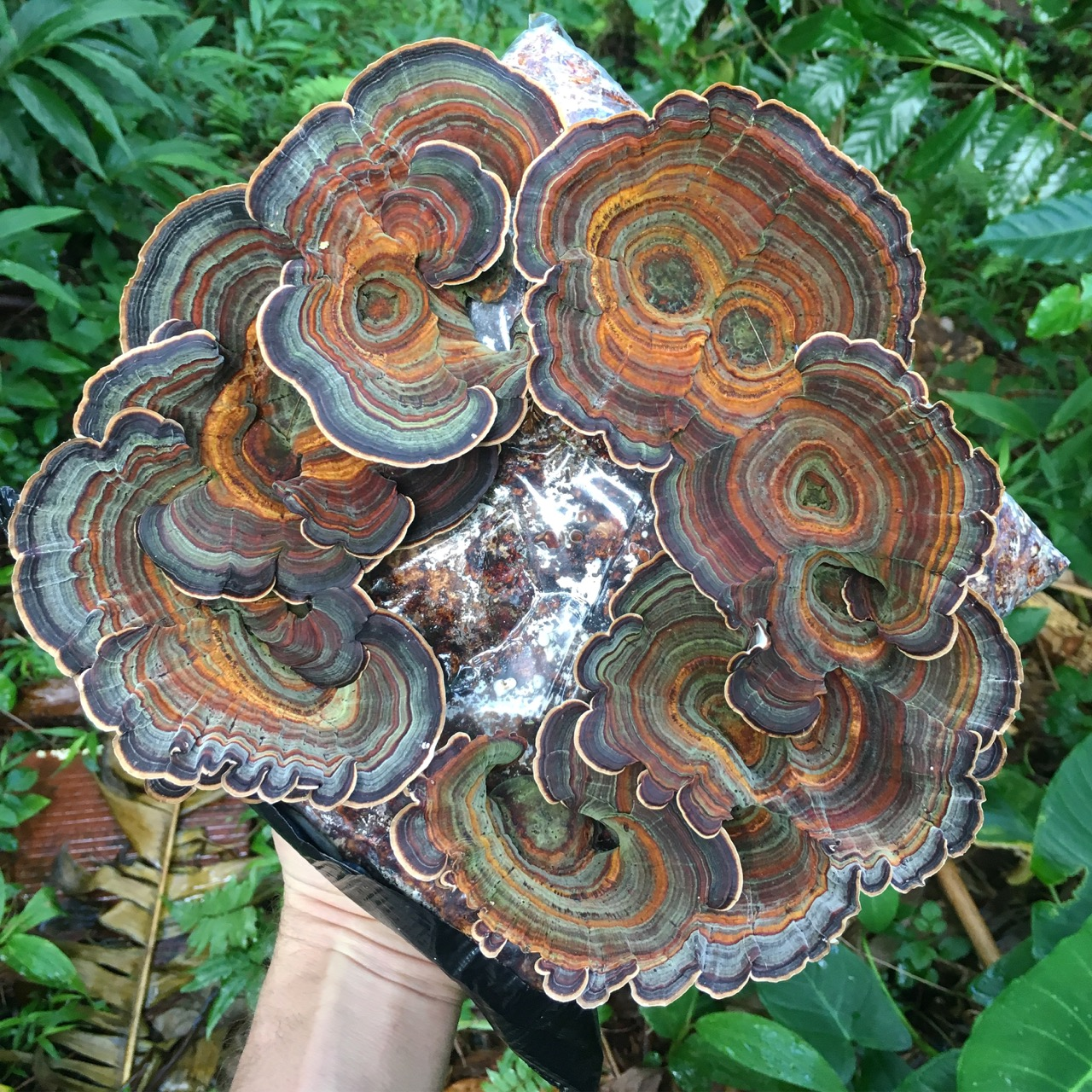 MUSHROOMS AS MEDICINE: CHRIS RITSON IN CONVERSATION WITH ISABELLA HUGHES,THURSDAY APRIL 12 - 5:30 - 6:30 PMCo-presented by CONTACT and HBF,Chris Ritson, who was raised on Oʻahu and continues to live and work on Tantalus, will discuss his practice in conversation with Isabella Ellaheh Hughes, which is informed by society's relationship to nature, which ranges from video and installation to living, generative sculpture.An alumni artist of Honolulu Biennial 2017 with his Mushroom Paintings, Ritson is exhibiting a continuation of his living Mushroom Paintings in Contact Zone.This event is FREE and open to the public, but space is limited to 25. Please RSVP to vip@honolulubiennial.org to reserve your seat.Located at Luxury Row, 2124 Kalakaua Avenue.Free parking available at Luxury Row valet on Kalaimoku.