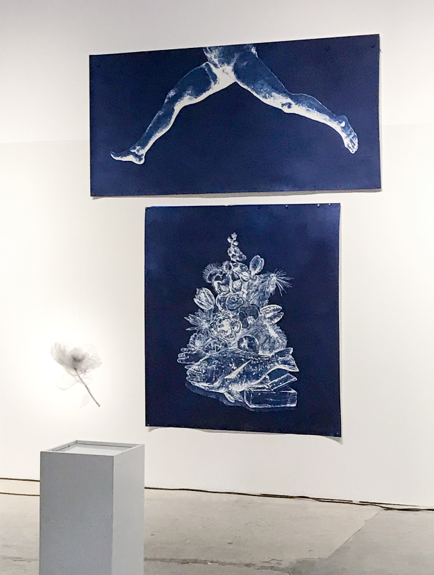 "The Leap: Euphemism  Installation View Cyanotypes. 74 x 96"". 2018."