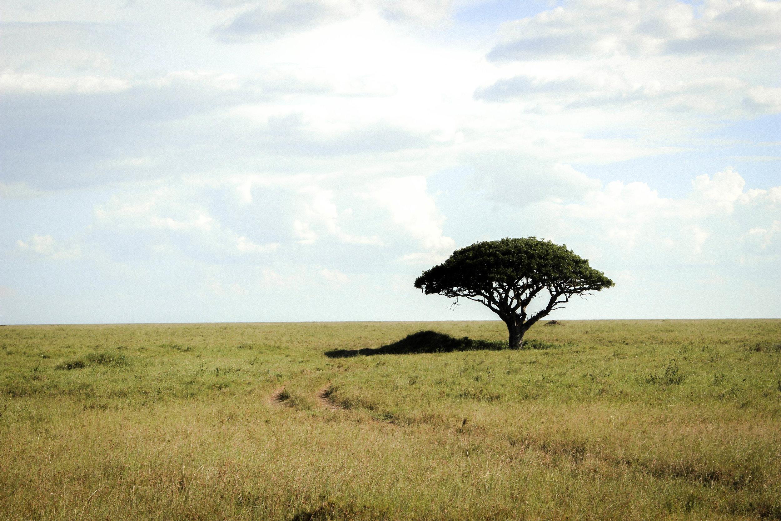 Tanzania safari traveling fro wakanda