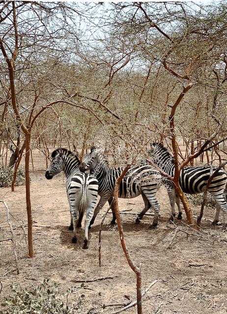Travelingfro x Teranga Retreat Bandjia Reserve Safari 2019-2.jpg