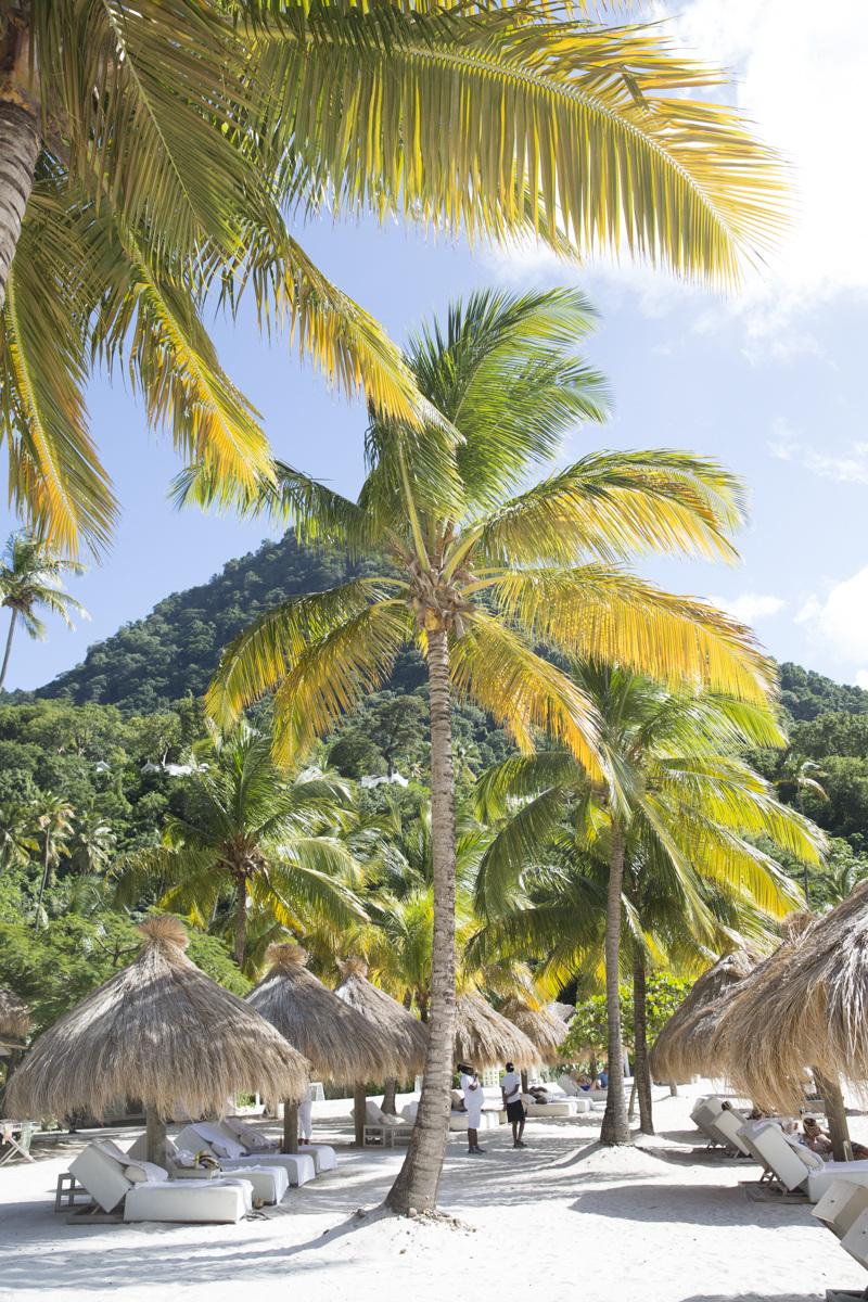 2014-St-Lucia-1941_800.jpg